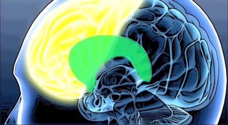 脳の中の前頭葉の位置を表しているイメージ