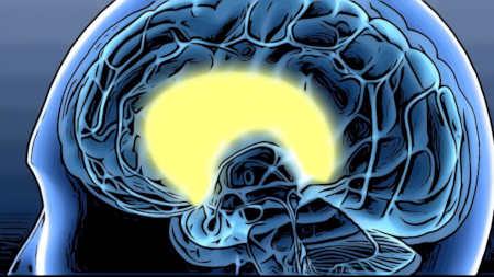 脳の中の大脳辺系の位置を表しているイメージ